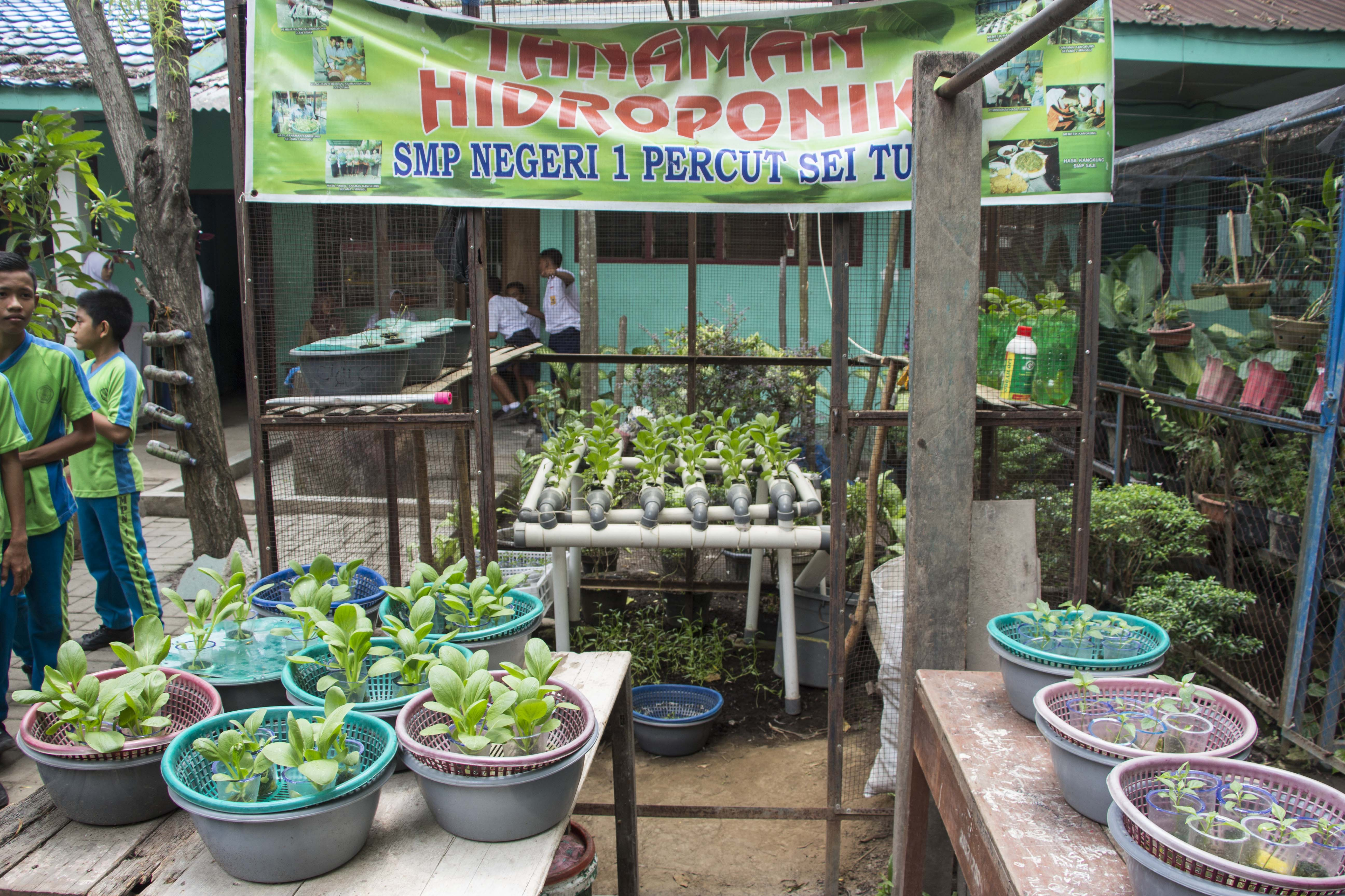 Cooperation with Indonesian schools and Green School programe
